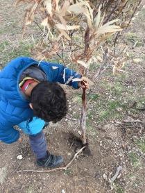 planting branch1